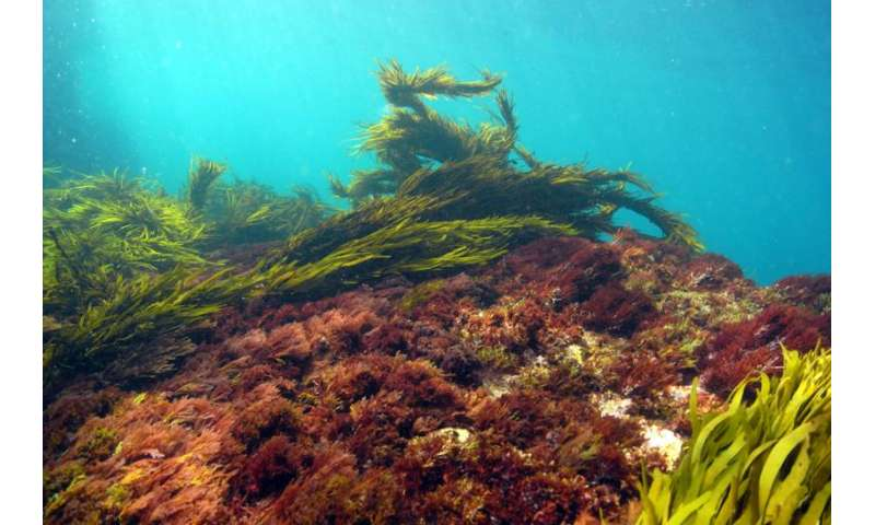 Study backs seaweed's carbon capturing potential