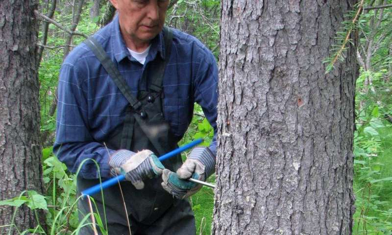 Study: changing climate prompts boreal forest shift