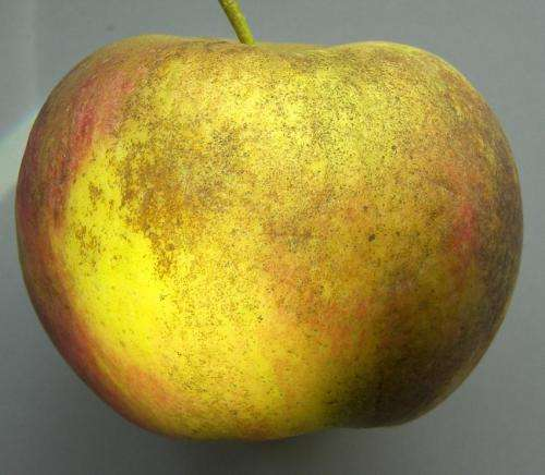 Study reveals causes of apple skin spot