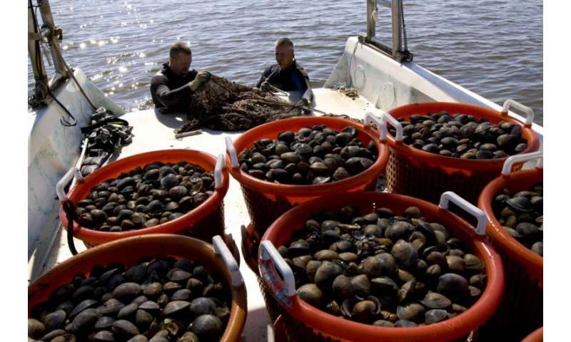 Study shows seafood samples had no elevated contaminant levels from oil spill