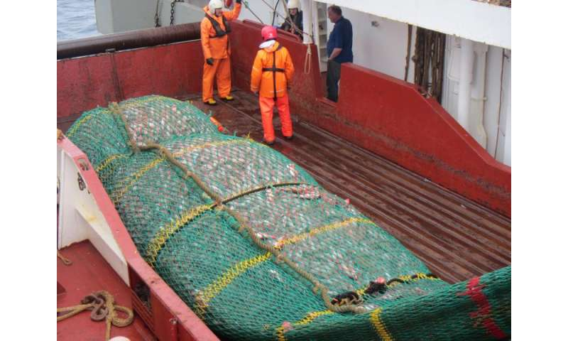 Tailored ocean management strategies needed to avoid depletion of fish stocks