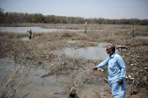 Talib Kacchi looks at a destroyed mangrove swamp along a beach on the Arabian Sea in Karachi