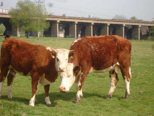 Testing for bovine tuberculosis is more effective than badger culls at controlling the disease