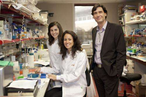 The CNIO develops an anti-obesity treatment in animal models