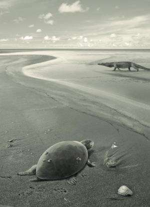 The first European sea turtles became extinct due to changing sea levels