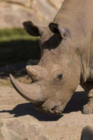 The last population of wild northern white rhinos was wiped out nearly a decade ago