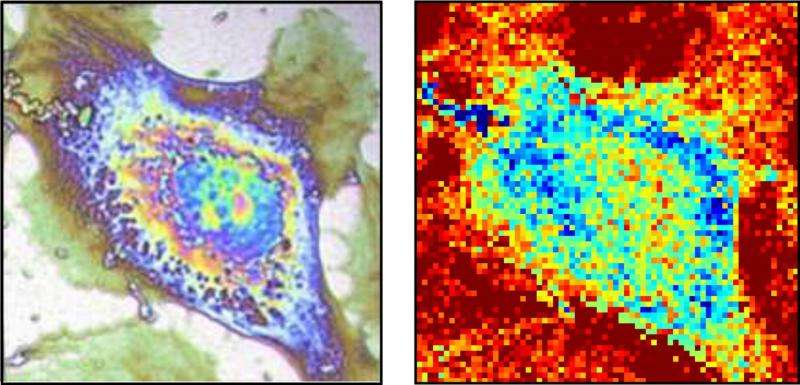 Thermal microscopy of single cells