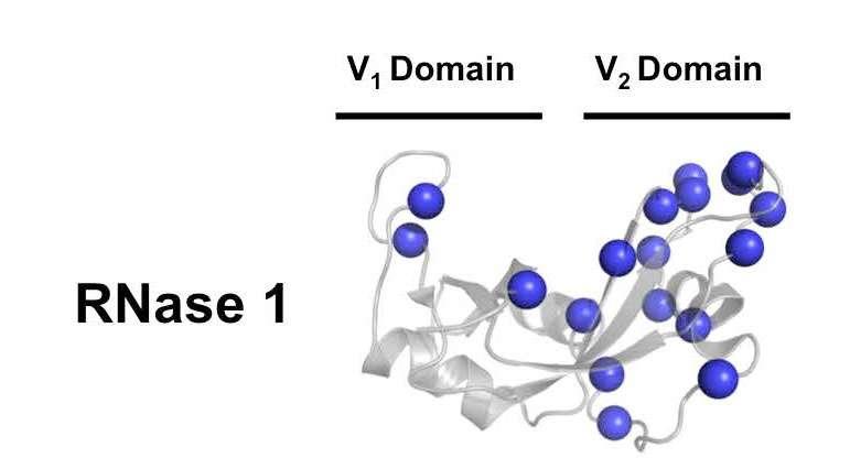 The subtle dance of atoms influences enzyme activity