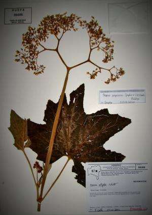 Three new Begonia plant species from Brazil