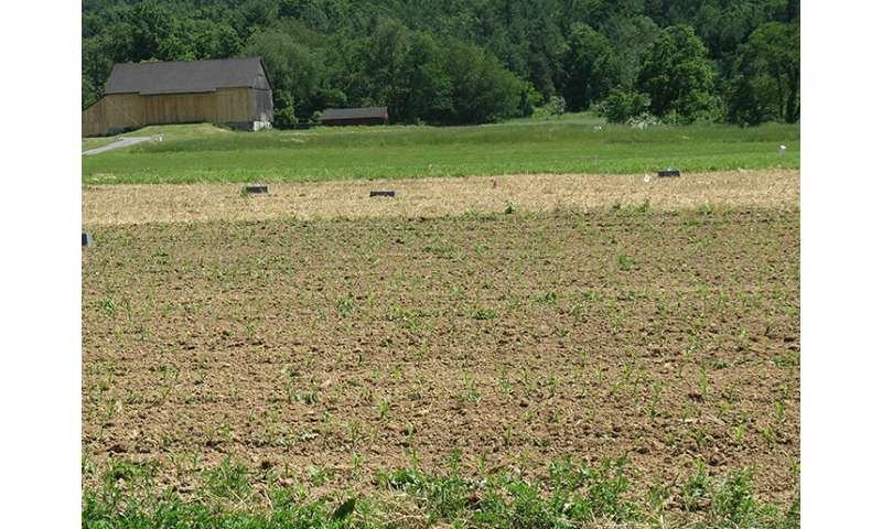 Tillage timing influences nitrogen availability and loss on organic farms