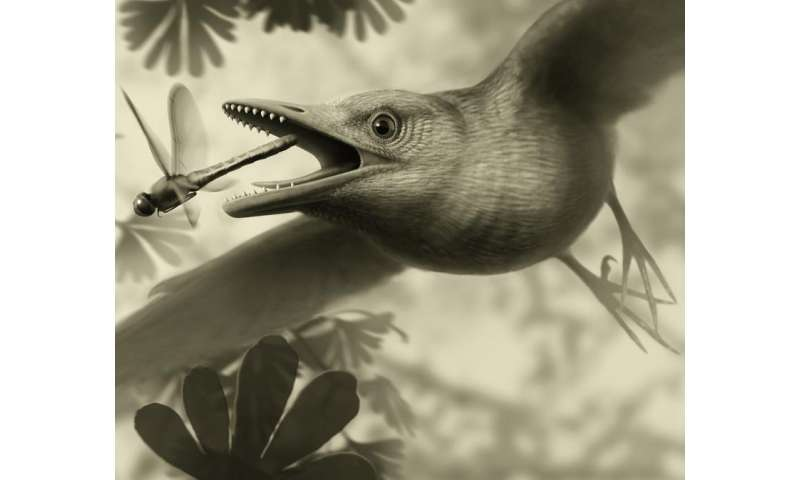 Tiny ancient fossil from Spain shows birds flew over the heads of dinosaurs