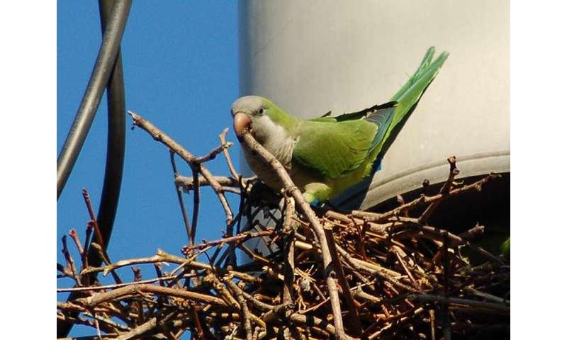 Tracking an invasive bird
