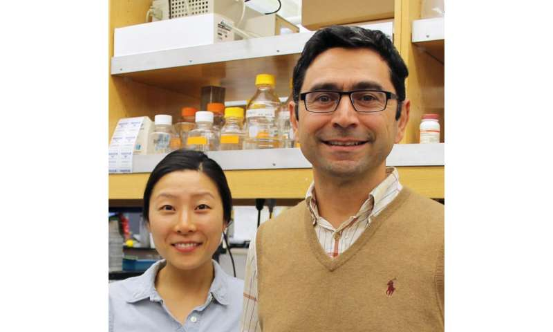 TSRI-led team finds long-sought protein sensor for the 'sixth sense' -- proprioception
