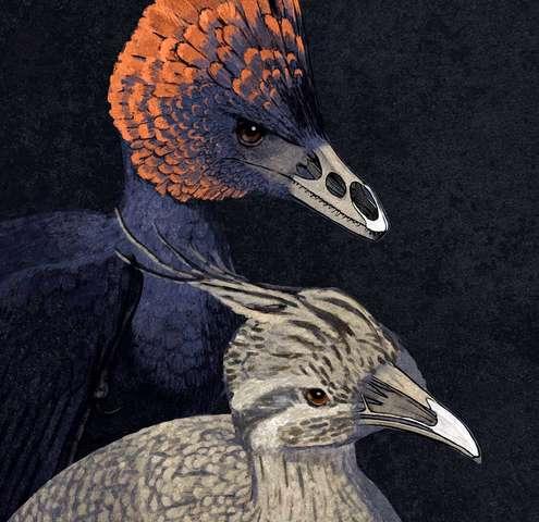 Tweaking the beak: Retracing the bird's beak to its dinosaur origins, in the laboratory