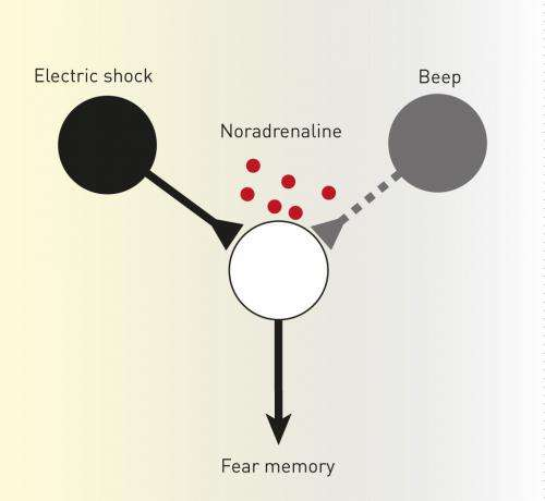 Two mechanisms work in tandem to form memories of frightening events