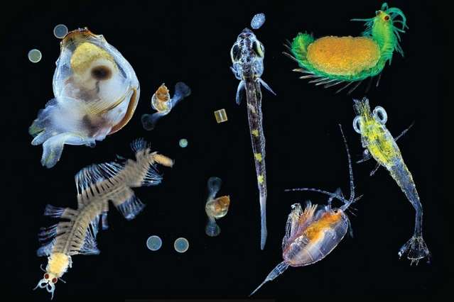 Uncovering diversity in an invisible ocean world