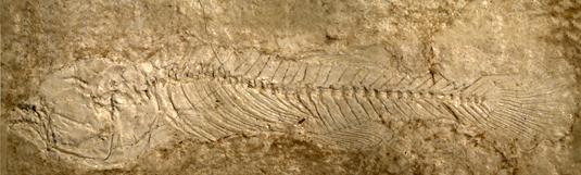 Unique fish fossils identified