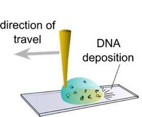 Untangling DNA with a droplet of water, a pipet and a polymer