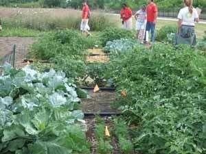 Urban gardeners can take simple precautions to avoid contaminants