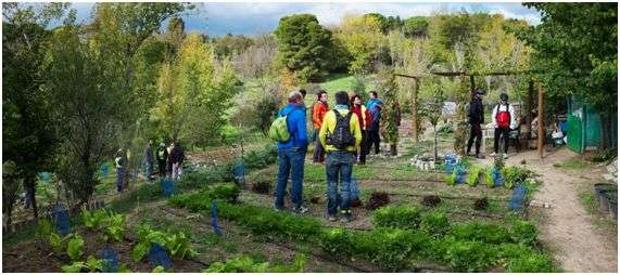 Urban gardens and human health