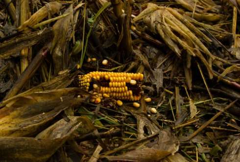Use of residues from agriculture and forestry as energy sources improves food security