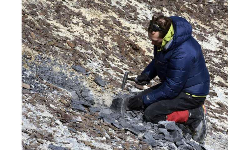 Video: Research team discovers plant fossils previously unknown to Antarctica