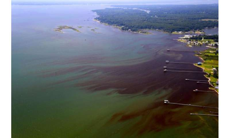 VIMS reports intense and widespread algal blooms