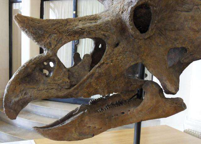 Visiting Jurassic World? Don't feed the triceratops