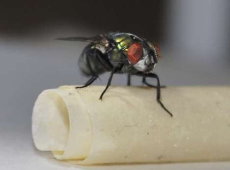 Waging war on Australia's nastiest parasite: scientists map blowfly genome