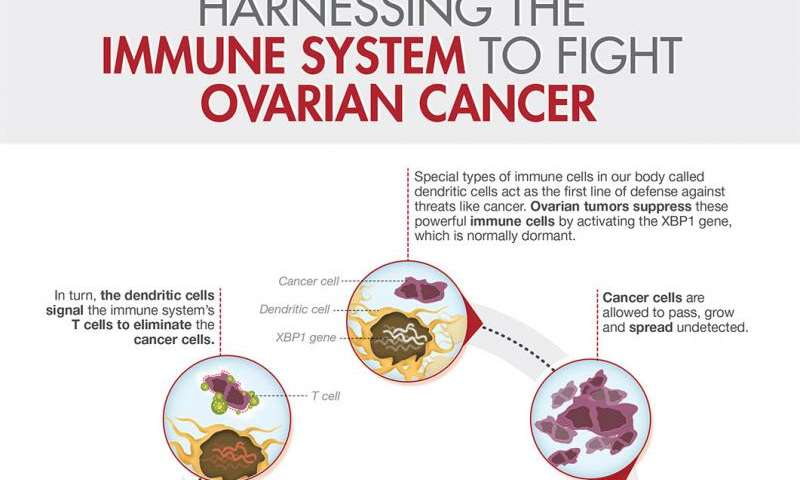 WCMC researchers discover how ovarian cancer halts body's natural defense against tumor
