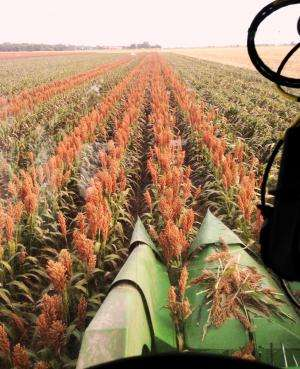 Weather forecasts could become seeding forecasts