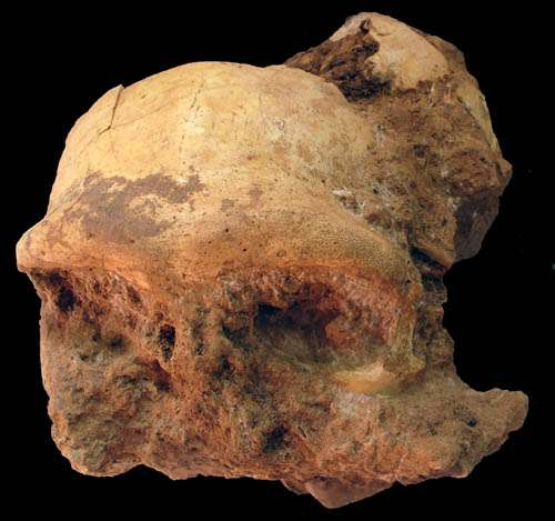 Well-preserved homo erectus skull discovered in Eastern China