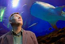 Whale shark project lets students dive into genetic research