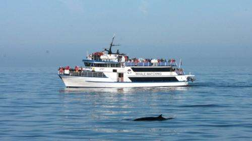 Whale watching impacts on minke whales are not likely to be a conservation threat