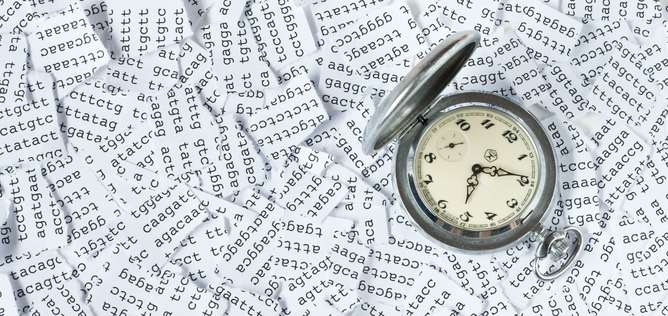 What is the molecular clock?