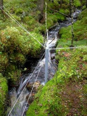 Where are the hotspots of plant diversity along boreal streams?