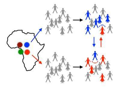 Why do new strains of HIV spread slowly?