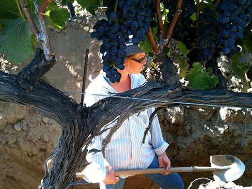 Winery wastewater a viable water source for vineyards