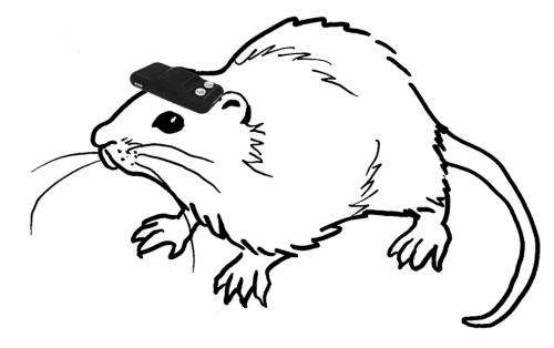 With geomagnetic compass hooked to the brain, blind rats act like they can see