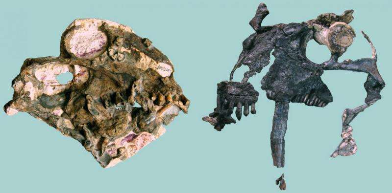 With teeth like that, this pre-dinosaur vegetarian was no push over
