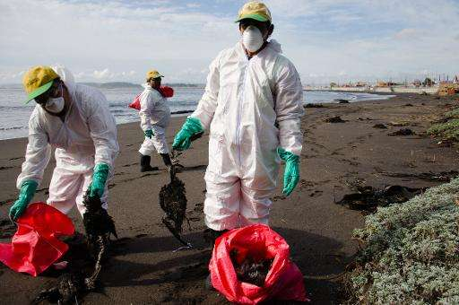 Workers put dead birds into plastic bags on the beach in Concepcion, Chile on May 18, 2015
