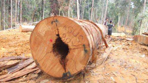 Yellow light for forest-saving programme in Indonesia