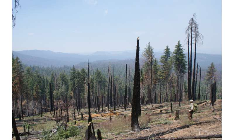 Yosemite forest fire example of possible things to come