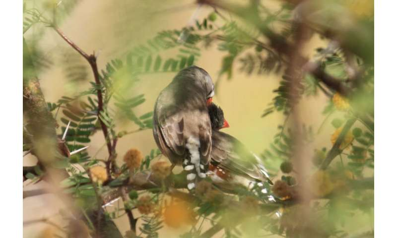 Zebra finches change their call communication pattern in groups according to their reproductive status