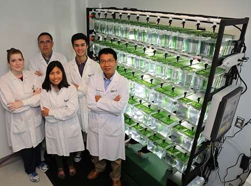 Zebrafish accelerate research against pancreatic cancer