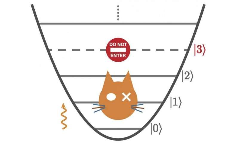 Zeno cat