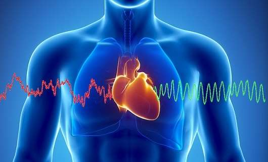 Zinc at the heart of new study