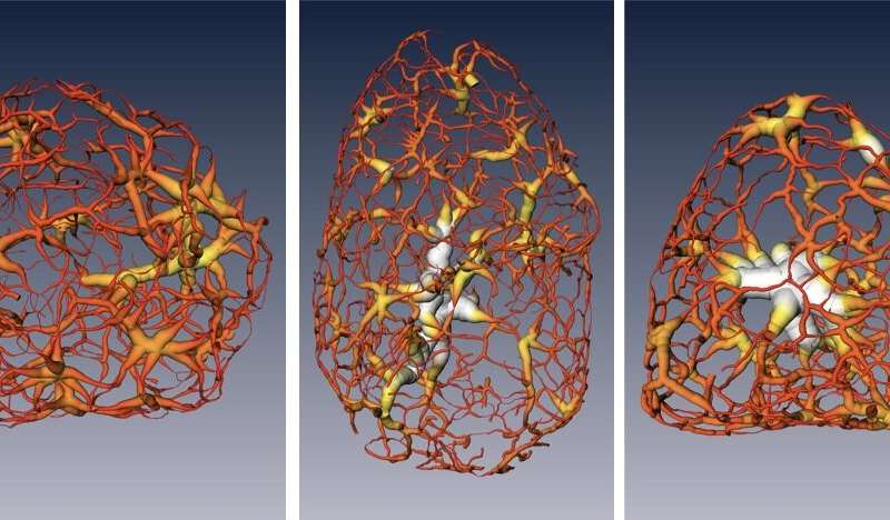 3-D imaging technique maps migration of DNA-carrying material at the center of cells
