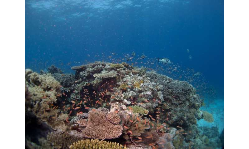 Achieving fish biomass targets: The key to securing a sustainable future for coral reefs