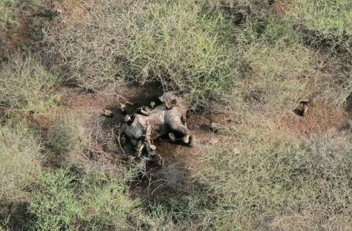 An aerial view of a dead, poached elephant lying in a National Park in South Sudan on July 10, 2015 in a photo provided by the U